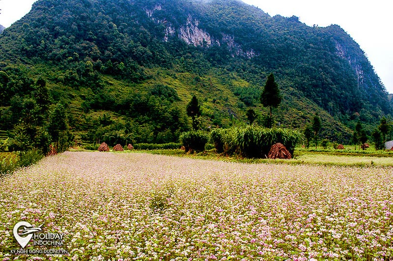 tour ha giang from hanoi